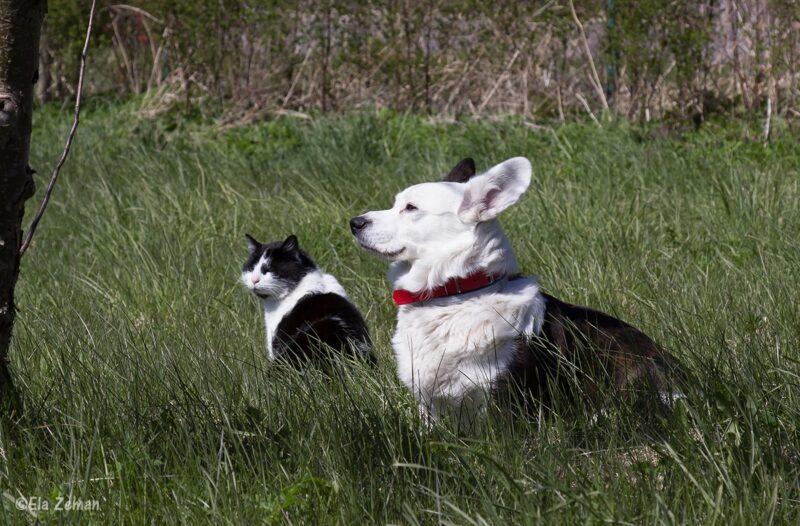 pies i kot elazeman