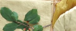 Natural dyeing workshops